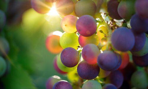 Het perfecte wijncadeau