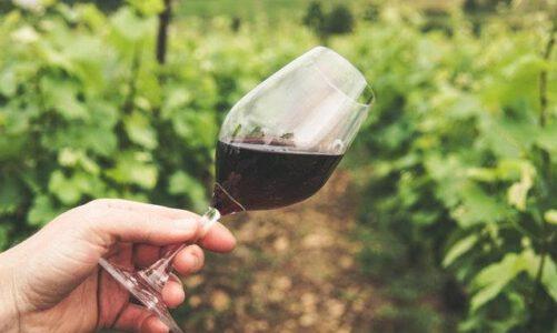 Opzoek naar echt goede wijnen?